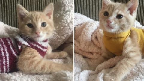 Dieses Kätzchen trägt immer einen Pulli … und das aus einem ganz bestimmten Grund!