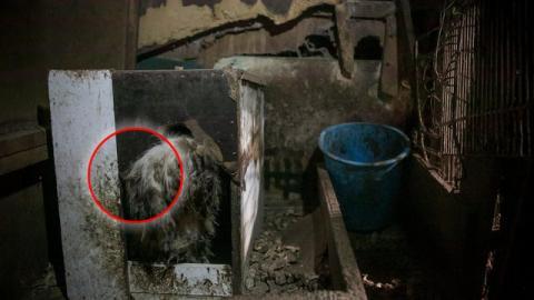 Ein Mann rettet einen mißhandelten Hund aus einer koreanischen Fleischfarm