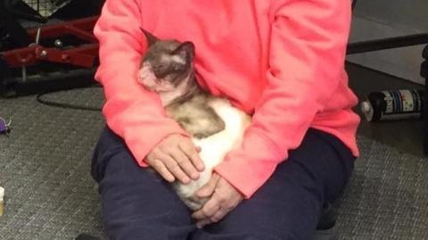 Eine Frau rettet eine Siam-Katze, die fast ihr ganzes Fell verloren hat