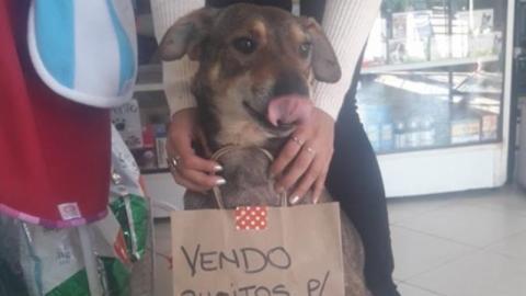 Hund ist krebskrank: Dann hat eine Tierärztin eine geniale Idee, um ihn zu retten!
