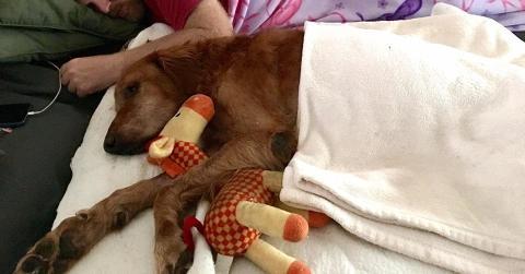 Seinem krebskranken Hund schenkt dieser Mann einen letzten wunderbaren Spaziergang!