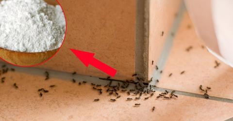 So bekommst du ganz einfach Ameisen aus dem Haus. Es braucht nicht viel!