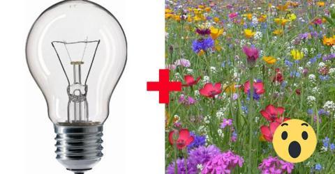 """""""Flowerium"""": Blumen in der Glühbirne, der Trend aus Japan"""