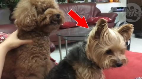 Dieser Hund kann es nicht leiden, wenn seine kleine Freundin angefasst wird. Da kennt er kein Pardon.