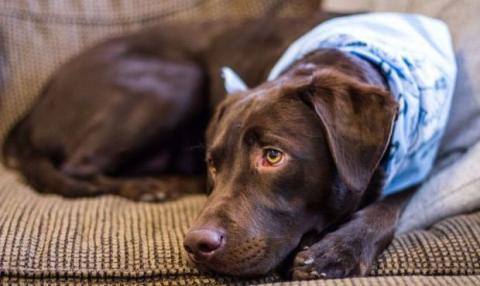 Labrador Eliot ist seit 8 Monaten verschwunden. Seine Geschichte bringt nicht nur sein Frauchen zum Weinen!
