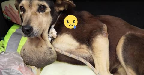 Dieser Hund wurde angeschossen auf der Straße gefunden! Doch dann geschah das Unglaubliche!
