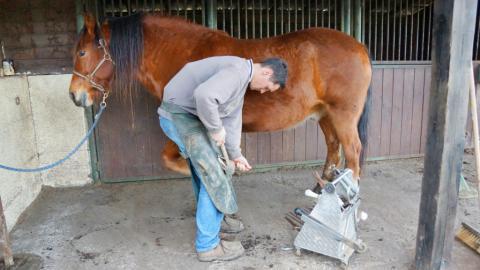 Pferd bekommt neue Hufe. Plötzlich filmt die Kamera eine intime Szene!
