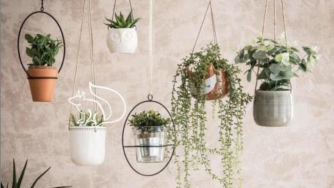 Diese fünf Zimmerpflanzen verbessern das Raumklima