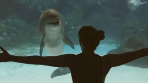 Dieser Delfin ist fasziniert von dem, was das Mädchen da macht!