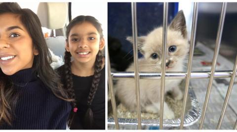Ein Mädchen schreibt eine sechsseitige Abhandlung, um ihre Eltern davon zu überzeugen, eine Katze aus dem Tierheim zu adoptieren!