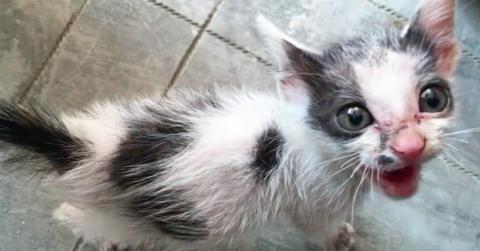 Ein Mann rettet ein verwaistes Kätzchen am Straßenrand