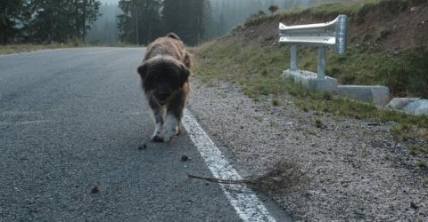 Damit hat er nicht gerechnet: Er setzt seinen Hund auf der Straße auf und das hat Folgen