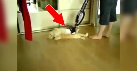 Diese Katze liebt es, wenn sein Frauchen es mit dem Staubsauger massiert