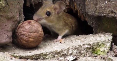 Süsse Maus will beim Sex gefilmt werden