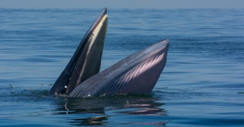 Auf den Philippinen strandet ein verhungerter Wal. Der Grund macht wütend