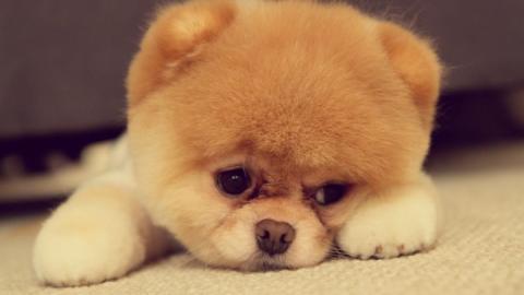 Deshalb empfinde ich mehr Mitleid mit einem Hund als mit einem Menschen