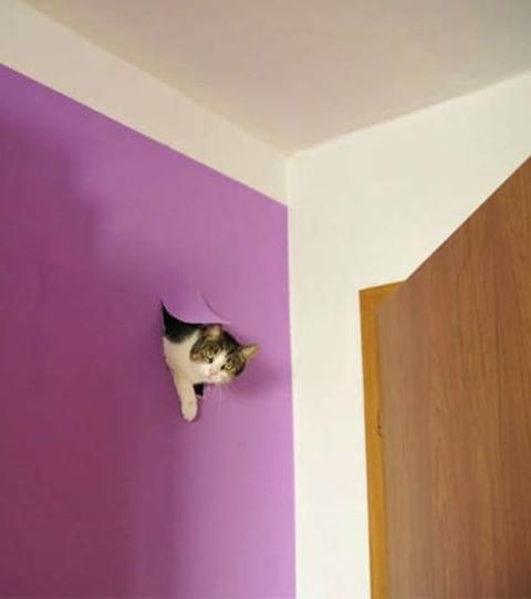 f nfzehn zerst rerische katzen und ihre missetaten. Black Bedroom Furniture Sets. Home Design Ideas