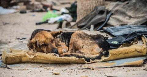 Mexiko: Eine Frau findet einen blinden Hund auf einer Matratze im Müll