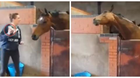 Dieses Pferd muss einfach tanzen, wenn es Musik hört!