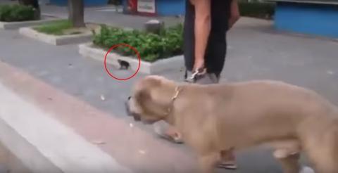 Der große Hund stürzt sich auf das kleine Kätzchen! Doch was als nächstes passiert, wirst du nicht glauben!