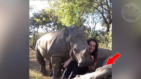 Zwei Nashörner genießen ihre Streicheleinheiten