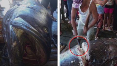 Er fängt einen 200 kg schweren Fisch... Was er in seinem Bauch findet, ist mehr als beängstigend!