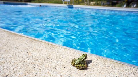 Um die ganzen kleinen Tiere und Frösche vor dem Ertrinken zu retten, hat diese Poolbesitzer die beste Lösung aller Zeiten!