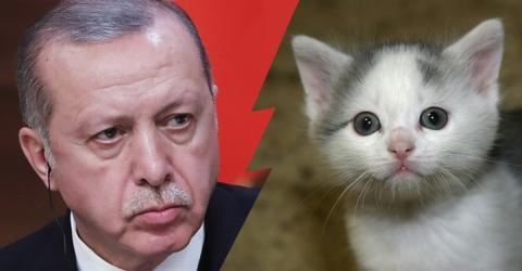 Tierquälerei: So drastisch geht Erdogan jetzt in der Türkei vor!