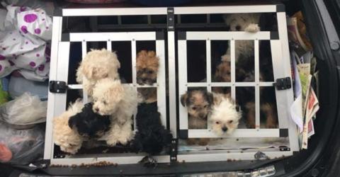 Fahrzeugkontrolle: Polizei findet einen Kofferraum voller Hundewelpen