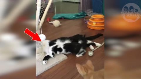 Diese Katzenmama möchte entspannen. Ihre niedlichen Kätzchen lassen sie jedoch nicht in Ruhe!