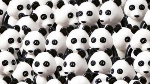 Ein Hund versteckt sich zwischen all den Pandas! Kannst du ihn finden?
