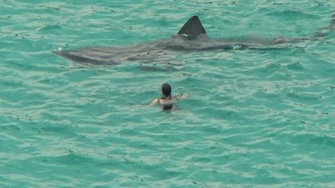 Ein Taucher wurde während einem Wettkampf von einem Riesenhai angegriffen