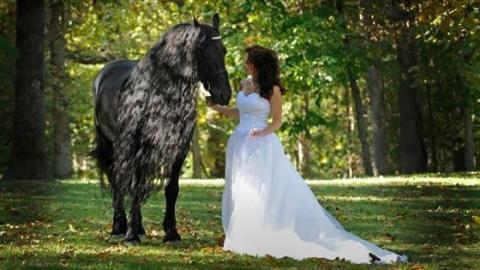 Dieses Pferd soll das schönste der Welt sein: Seht, wie es sich in der Sonne bewegt!