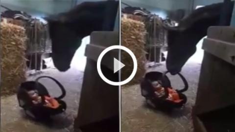 Dieses Baby wurde in einem Pferdestall vergessen... Die Reaktion des Pferdes, als es zu weinen beginnt, ist einmalig!