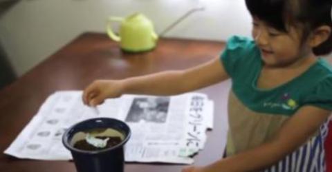 Sie legt die Zeitung in einen Blumentopf und kann nicht fassen, was daraus entsteht