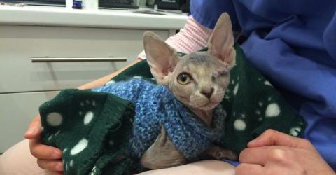 Eine einäugige Katze wird die beste Freundin des Pitbulls der Familie