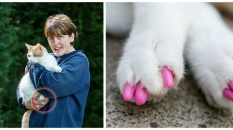 Diese Frau wird heftig kritisiert, weil sie ihrer Katze rosa Plastikkrallen verpasst hat
