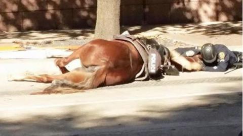 Polizist weicht nicht von der Seite seines sterbenden Pferdes und rührt alle zu Tränen