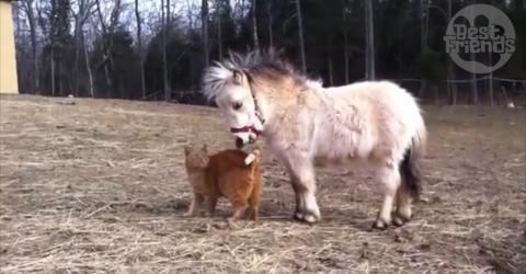 Katze und Pony schließen Freundschaft