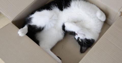 Katze klettert in Paket - dann geht die Post ab