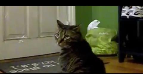 Jeden Morgen wartet die Katze brav vor der Haustür