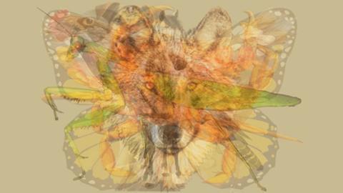 Das erste Tier, das du siehst, verrät etwas über deine Persönlichkeit