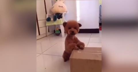 Errätst du, was für ein Tier das ist?