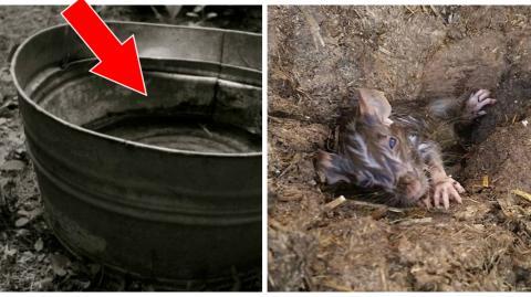 Eine Frau findet eine Ratte in einem Wassereimer in ihrer Scheune