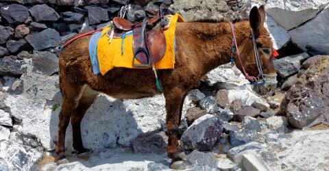 Sie reiten auf einem Esel - dann werfen sie einen Blick unter den Sattel