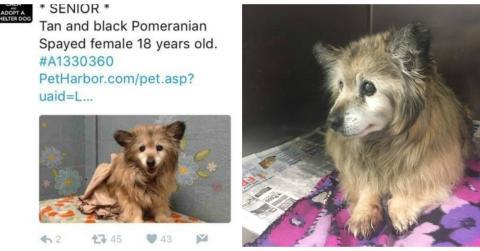 Diese Frau rettet einen alten 18-jährigen Hund, der im Tierheim eingeschläfert werden sollte