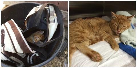 In einen Rucksack eingesperrt und in eine Mülltonne geworfen, wurde diese Katze gerade noch rechtzeitig gefunden...