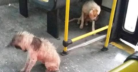 Busfahrer riskiert mit einer mutigen Aktion seinen Job für diese zwei Hunde