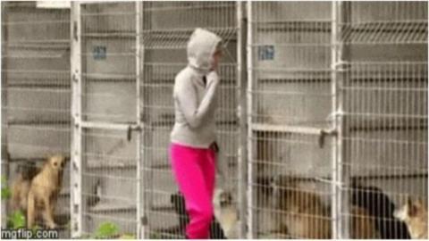 Sie adoptiert 250 Hunde eines Tierheims, um sie vor Misshandlung zu schützen