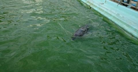Tierschützer dringen heimlich in stillgelegten Marine-Park in Japan ein